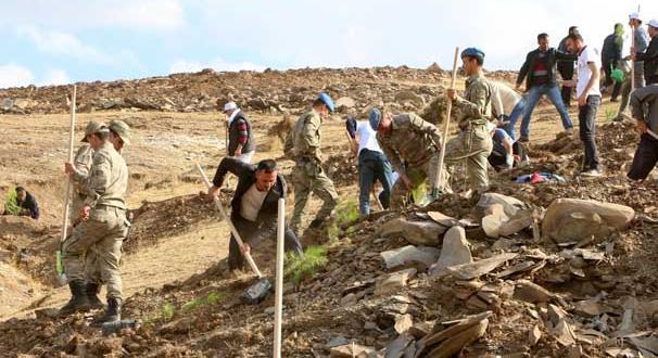 Şırnak'ta asker ve vatandaşlar birlikte fidan dikti