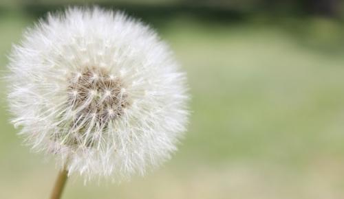 """Meteoroloji Genel Müdürlüğü, """"polen"""" kaynaklı alerjilere karşı tahmin ve uyarılarda bulunacak"""