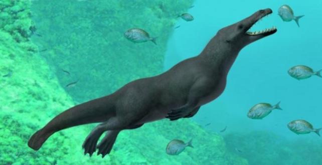 Peru'da 43 milyon yıl öncesine ait dört bacaklı 4 metre boyunda balina fosili keşfetti