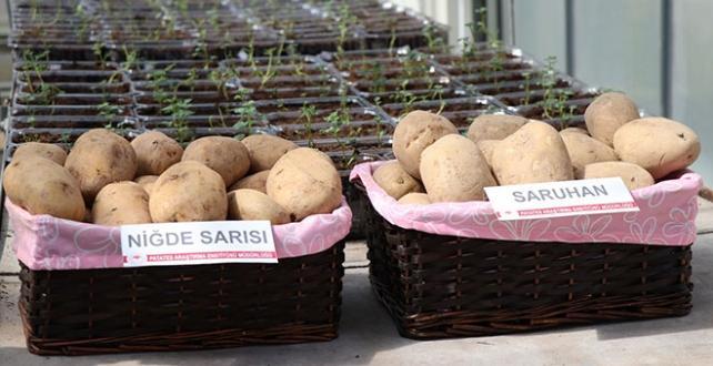 """""""Niğde Sarısı"""" ve """"Saruhan"""" adı verilen yerli patates çeşitleri Türk tarımına kazandırıldı"""