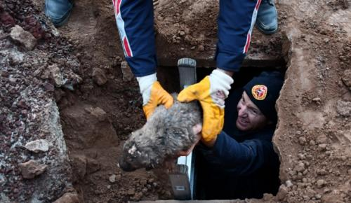 Foseptik çukuruna düşen 5 köpek yavrusu, itfaiye ekiplerince kurtarıldı