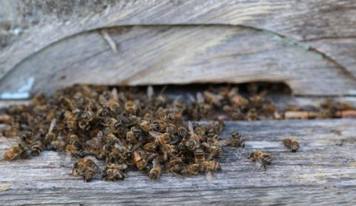 Milas ilçesinde, 103 kovandaki arıların tamamının öldüğü tespit edildi