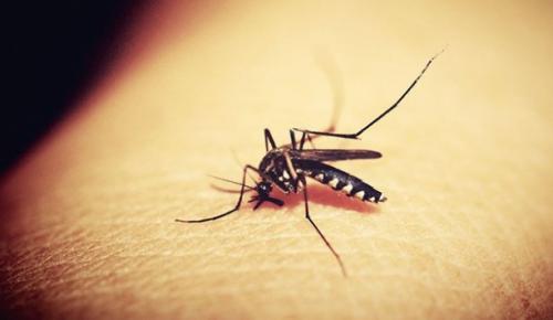 İstanbul'da sivrisinek sokması ile bulaşan Batı Nil Virüsü (BNV) enfeksiyonu taşıyan 4 vakanın tespit edildiğini açıkladı