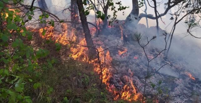 Samsun'un Bafra ilçesinde  yangın