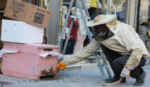 Hakkari'de arı istilası esnafa kepenk kapattırdı