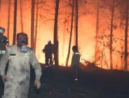 Pendik'te ormanlık alanda yangın