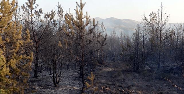 Tokat'ta 4 noktada çıkan yangın söndürüldü