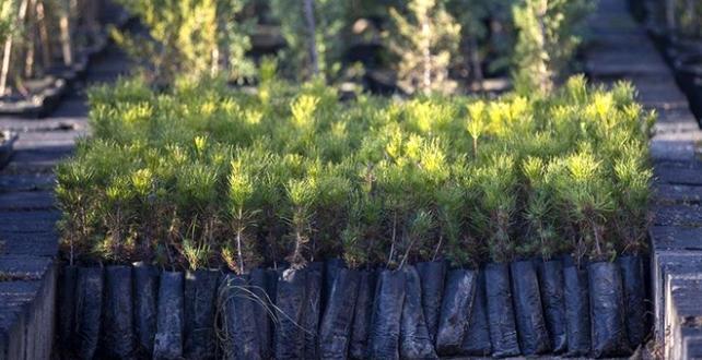 Özel ormanlar için ağaçlandırma teşviki geliyor