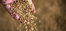 Buğday, arpa ve mısır ithalatında gümrük vergisi sıfırlandı
