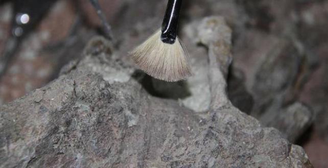 Arjantin'de 70 milyon yıllık dinozor kalıntıları bulundu