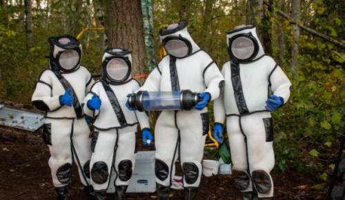 ABD'de katil arı operasyonu