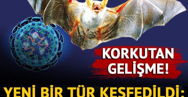 koronavirüse çok benzeyen yeni virüs keşfedildi!