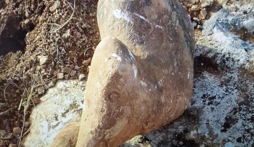 Şanlıurfa'da 70 Milyon Yıllık Fosiller Bulundu